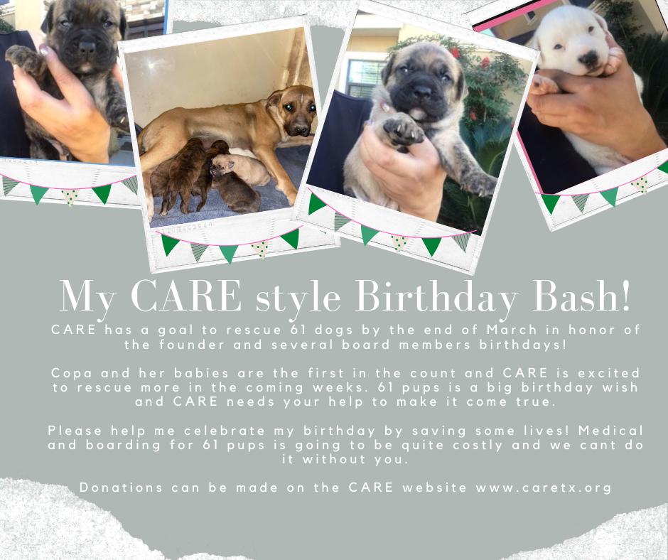 Birthday Bash For Board
